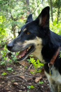 Our adventure dog, Rafa